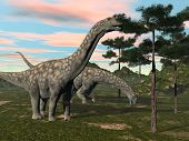 stock photo of eat grass  - Argentinosaurus dinosaur eating at the top of a tree by sunset - JPG