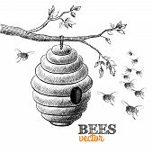 stock photo of beehives  - Honey bees and hive on tree branch isolated vector illustration - JPG