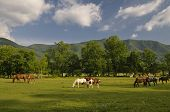 foto of cade  - A scenic view of Cades Cove and Horses in Great Smoky Mountains National Park Tennessee USA - JPG
