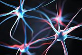 stock photo of nerve cell  - Neurons in the brain - JPG
