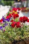 foto of planters  - Colorful flowers in a planter on a city sidewalk - JPG