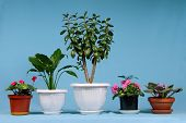 pic of house plants  - House plants - JPG