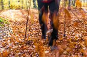 picture of cultivation  - Legs of man cultivating autumn in the forest Nordic walking - JPG
