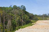 pic of deforestation  - Deforestation Environmental Problem - JPG
