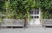 picture of ivy vine  - Climbing Vines of Ivy on a House with Wooden Bench - JPG