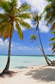 stock photo of french polynesia  - Palm trees at island of Bora Bora - JPG