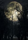 image of moonlit  - Halloween background with moonlit sky and spooky trees - JPG