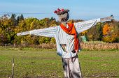 foto of scarecrow  - Scarecrow in a field on a sunny day - JPG