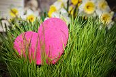 stock photo of narcissi  - Heart growing in green grass at the garden - JPG