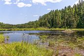 pic of beaver  - A beaver pond and beaver lodge in Algonquin Park Canada - JPG