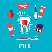 pic of section  - Dental hygiene medical concept in flat style with cross section of healthy tooth surrounded toothbrushes - JPG
