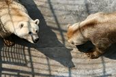 image of zoo  - Bears in the zoo park - JPG