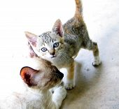 image of heartwarming  - a kitten with a mother cat - JPG
