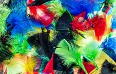 stock photo of mixture  - Some bright and colorful mixture of feathers - JPG