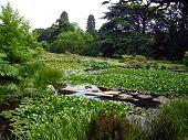 Summer Scenery, Cambridge Botanic Garden poster