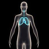 Постер, плакат: human body organes