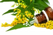 foto of goldenrod  - Homeopathy Solidago globules with blossoms of goldenrod - JPG