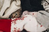Cute Cat Hiding In Stylish Sweaters, Space For Text. Kitty Maine Coon With Adorable Eyes In Pile Of poster