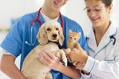 Vet Examining Dog And Cat. Puppy And Kitten At Veterinarian Doctor. Animal Clinic. Pet Check Up And  poster