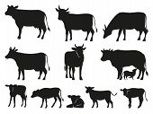 Cow Silhouette. Black Cows And Calf Mammal Animals. Pictogram. Farm Livestock Cow Pictogram Or Count poster