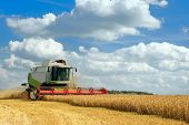 Combine Harvester Harvests Ripe Wheat. Agriculture Image poster
