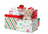 Adorable Orange And White Tabby Kitten Sitting In A Colorful Christmas Present Box Surrounded By Pre poster