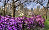 Spring In Central Park poster