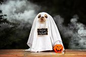 Funny Dog In Ghost Costume Posing For Halloween poster