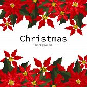 Christmas Holiday Season Background Of Red Poinsettia, Christmas Flower With Copy Space. Design For  poster