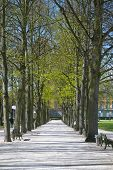 picture of bonnes  - Early spring in the center of Bonn Germany - JPG
