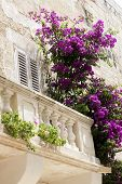 stock photo of climber plant  - A romantic old balcony in the Mediterranean with purple and pink bougainvilla climping on the railing - JPG