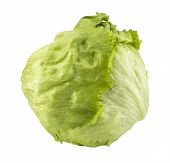 stock photo of iceberg lettuce  - Fresh Green Iceberg lettuce  - JPG