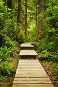 foto of pacific rim  - Wooden path through temperate rain forest - JPG