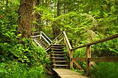 image of pacific rim  - Path through temperate rain forest - JPG