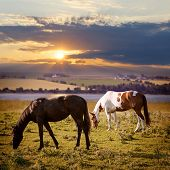 pic of paint horse  - Horses grazing in a rural pasture at sunset with view of countryside - JPG