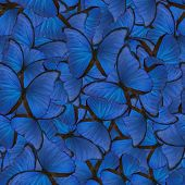 foto of blue animal  - seamless background from blue morpho butterflies - JPG