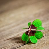 stock photo of fourleaf  - four leaf clover on wooden table close up - JPG