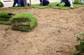 stock photo of horticulture  - New grass planting new sod grass in the garden - JPG