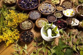 stock photo of century plant  - Fresh medicinal herbs - JPG
