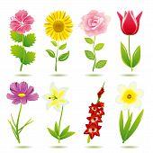 Постер, плакат: Цветок иконы set