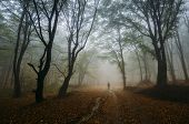 pic of ethereal  - Man walking in a dark mysterious magical forest with fog and path - JPG