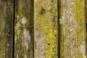 image of lichenes  - The surface of the bamboo with lichen - JPG