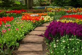 stock photo of floral design  - Stone path winding in spring flower garden with blossoming flowers - JPG