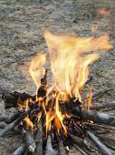 picture of bonfire  - camp wooden bonfire burning in the forest - JPG
