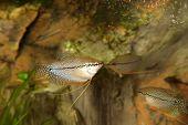 stock photo of saltwater fish  - Fish in the aquarium - JPG