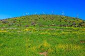 image of golan-heights  - Legendary Golan Heights - JPG
