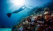 picture of vivid  - Lady freediver gliding underwater over vivid coral reef - JPG