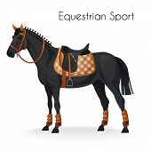 pic of girth  - Horse with equestrian sport equipment - JPG