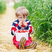 pic of strawberry blonde  - Cute little boy in glasses in glasses laughing and picking and red ripe strawberries on organic pick a berry farm in summer on warm day - JPG