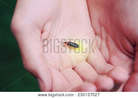 Firefly on a childs hand